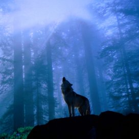solitary confrontation with primitive urges, survival instincts and inescapable forces of nature